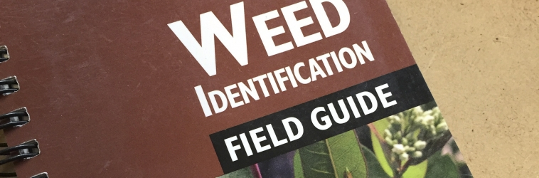 Weed Guide